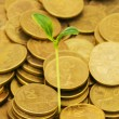 Green seedling growing from the coins — Stock Photo