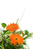 Orange gerberas isolated on the white — Stock Photo