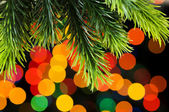 Close up of tree against blurred lights — Stock Photo