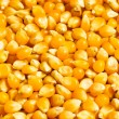 Bright corn kernels — Stock Photo