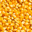 Bright corn kernels — Stock Photo #1922484