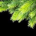 árvore de Natal, isolado no preto — Foto Stock