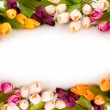 Frame made of colourful tulips - Stockfoto
