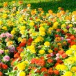 Flower bed on the bright day — Stock Photo
