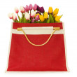 Tulips in the red bag isolated — Stock Photo
