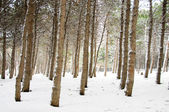 Forest on the winter day — Stock Photo