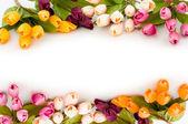 Rám vyrobený z barevných tulipánů — Stock fotografie