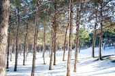Forest on a bright sunny day — Stock Photo