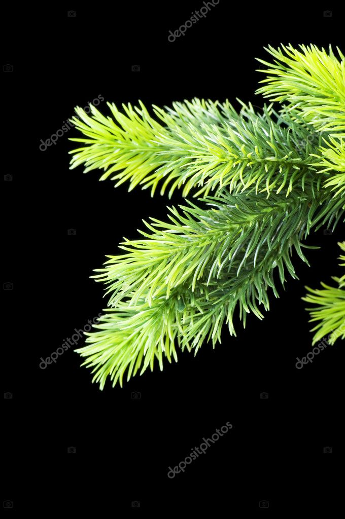 Christmas tree isolated on the black background — Stock Photo #1921771