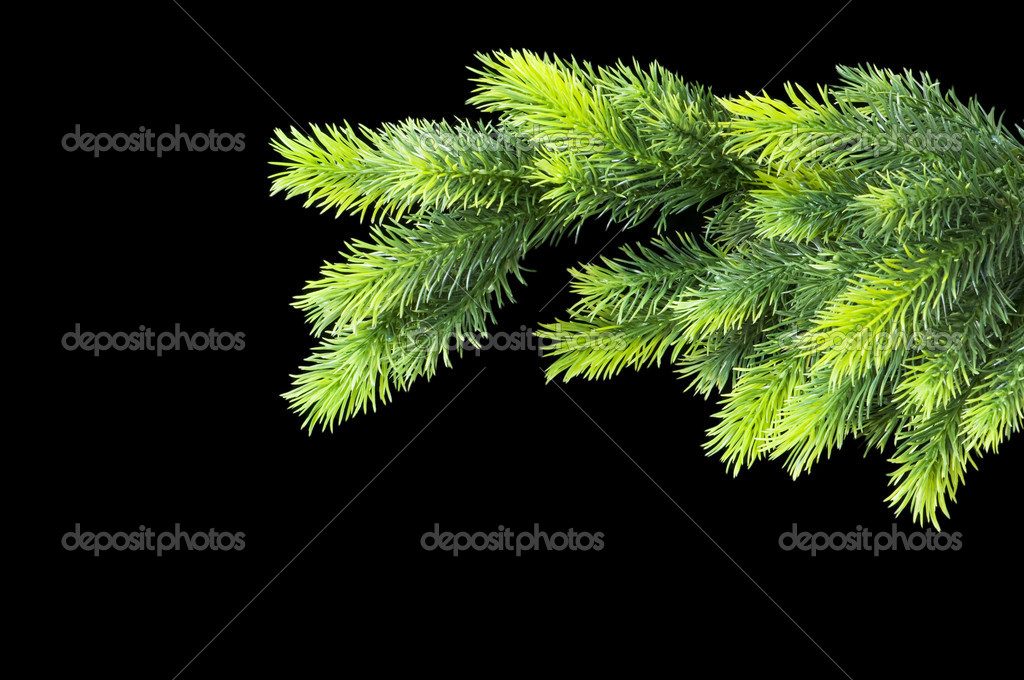 Christmas tree isolated on the black background — Stok fotoğraf #1922720