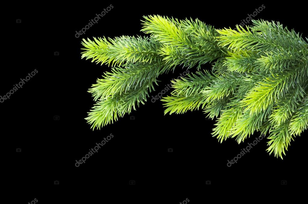 Christmas tree isolated on the black background — Photo #1922720