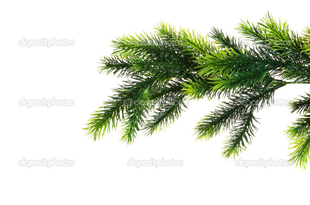 Close up of fir tree branch isolated on white  Stock Photo #1923020