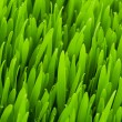 Stock Photo: Close up of green grass on summer day