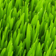 Close up of green grass on summer day — Stock Photo #1936455