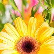 Stock Photo: Yellow gerberflower