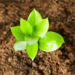 New life concept - green seedling — Stock Photo
