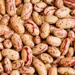 Bunch of beans — Stock Photo