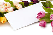 Tulips and blank message isolated — Stock Photo
