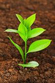 Nový život koncept - zelené sazenice — Stock fotografie