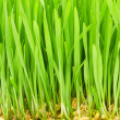 Close up of green grass — Stock Photo #1942079