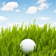 Foto de Stock  : Golf ball on the green grass