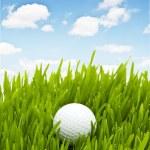 Golf ball on the green grass — Stock Photo