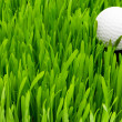 Golf ball on the green grass — Stock fotografie #1942092