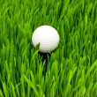 Golf ball on the green grass - Stok fotoğraf
