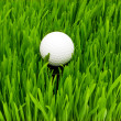 Golf ball on the green grass - Stockfoto