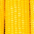 Extreme close up of corn cobs — Stock Photo