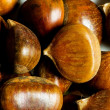 Many chestnuts - Stock Photo
