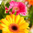 Yellow gerbera flower — Stock Photo #1945965