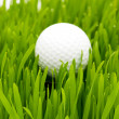 Golf ball on the green grass — 图库照片