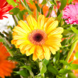 Yellow gerbera flower - Stock Photo