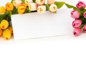 Tulipany i pustą wiadomość na białym tle — Zdjęcie stockowe