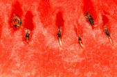 Extreme close up of the watermelon — Stock Photo