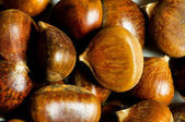 Many chestnuts — Stock Photo