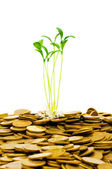 Green seedling growing from coins — Stock Photo