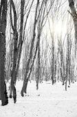Skogen och solen genom träden — Stockfoto