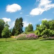 Foto Stock: Trees and lawn on bright day