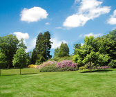 Trees and lawn on a bright day — Stock Photo