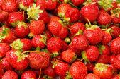 Lots of strawberries — Stock Photo