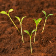 New life concept - green seedlings — Stock Photo