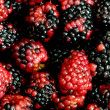Lots of berries — Stock Photo