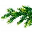 Close up of fir tree branch isolated — Stock Photo #1975574