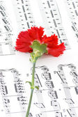 Red carnation flower on musical notes — Stok fotoğraf