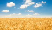 Wheat field on the bright day — Stock Photo