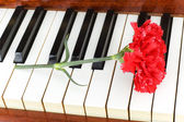 Romantic concept - carnation on piano — Stock Photo