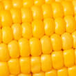 Extreme close up of yellow corn cobs — Stock Photo