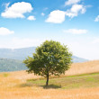 Lonely tree on the wheat field — Stock Photo